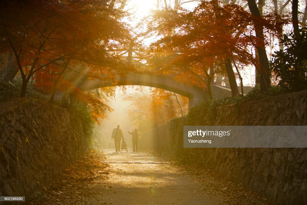 two senior people walking in the morning.beautiful sunshine through the red maple leaves. : Stock Photo