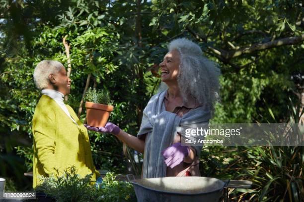 Two Senior women gardening together