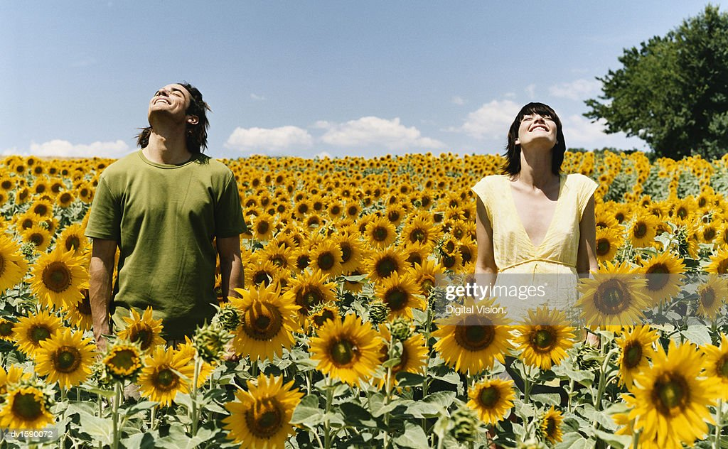 Two Serene People Standing with Their Eyes Closed in an Abundant Field of Sunflowers : Stock Photo