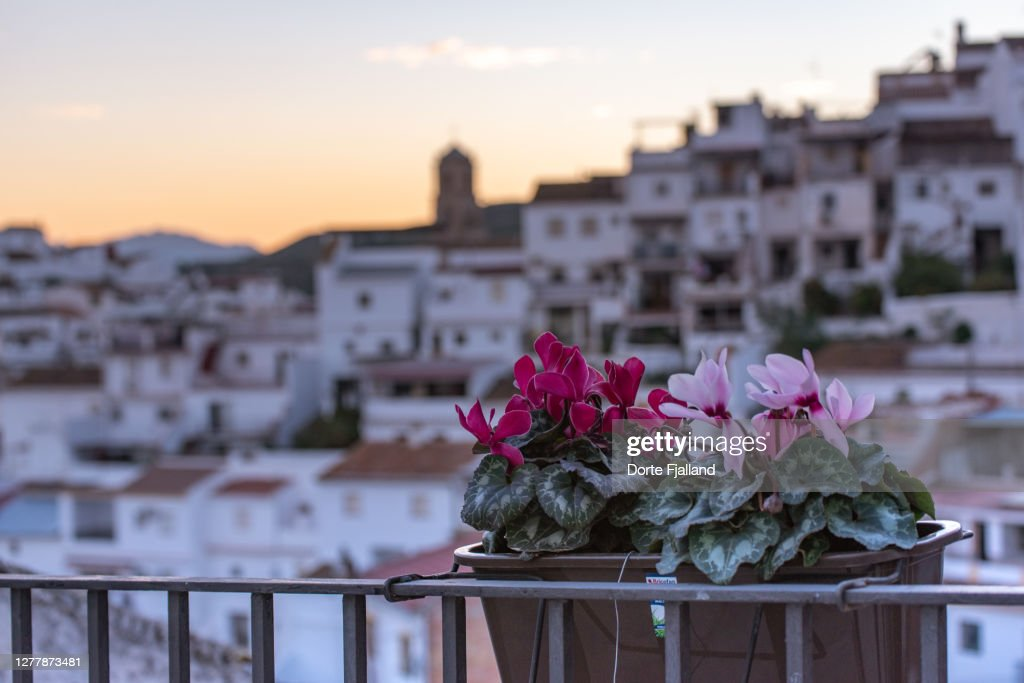 Two shades of pink Cyclamen persicum on a rail, blurred white village a background : Foto de stock