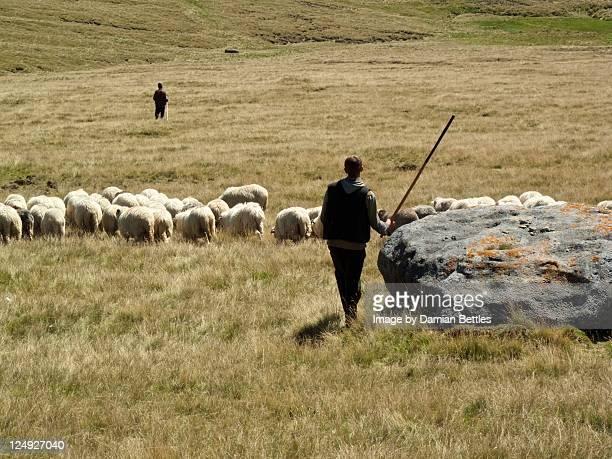Two shepherds herding their flock of sheep