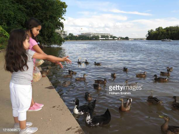 two sisters 5 years and 7 years old feeding the ducks at georgetown harbor, washington dc, usa. - 6 7 years stock pictures, royalty-free photos & images