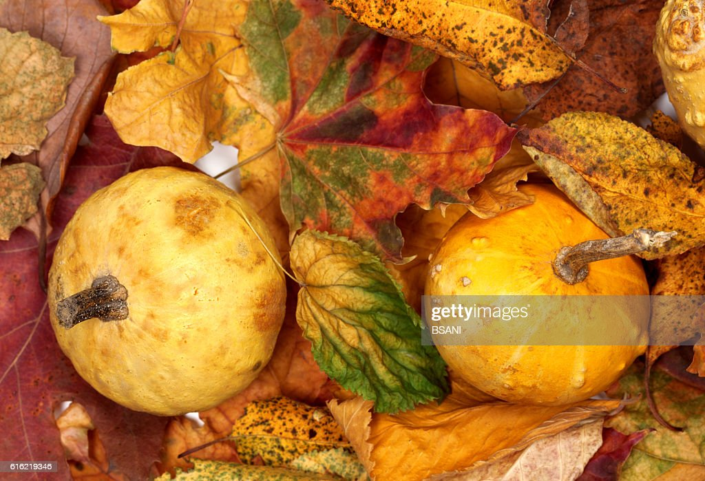 Two small decorative pumpkins on autumn multicolor leafs : Stock Photo