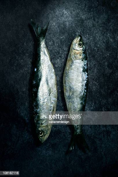 Two Small Herring Fish Lying on Grunge Background