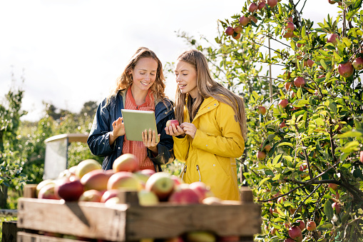 Two smiling women using tablet in apple orchard - gettyimageskorea