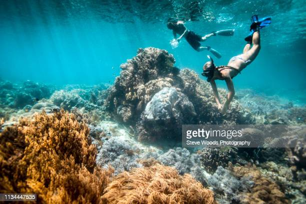 two snorkelers perform scientific surveys on coral reef and fish, raja ampat, west papua, indonesia - snorkeling stock pictures, royalty-free photos & images
