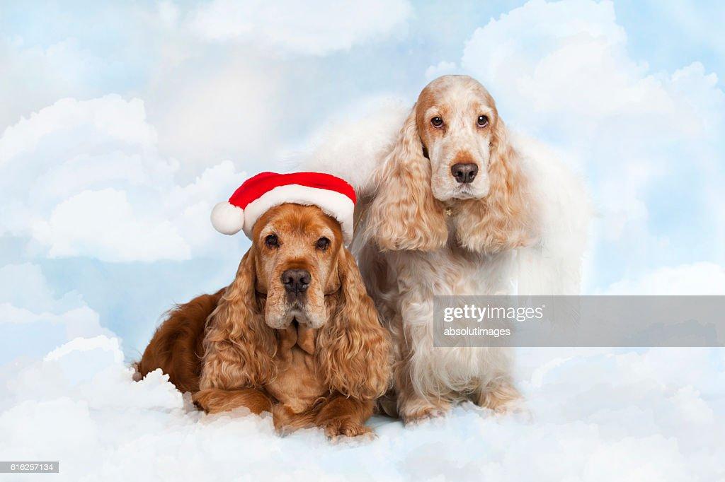 two spaniel dogs with santa hat : Foto de stock