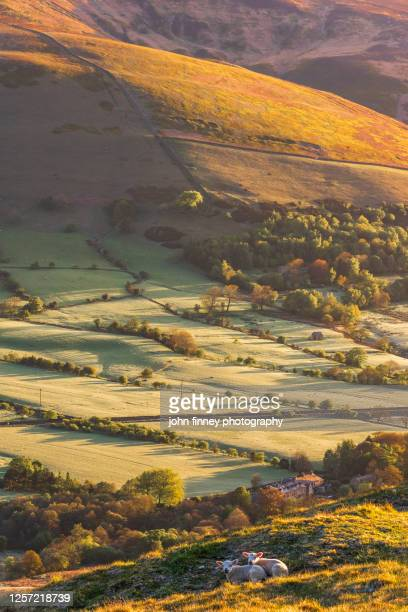 two spring lambs above edale, in derbyshire - england stock pictures, royalty-free photos & images