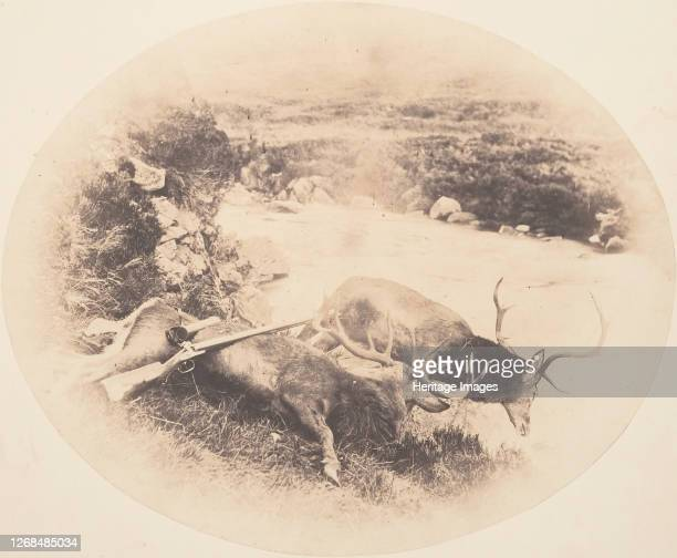 Two Stags One Shot by Mr Ross and the Other by Mrs Ross circa 1858 Artist Horatio Ross