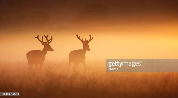 Deux stags