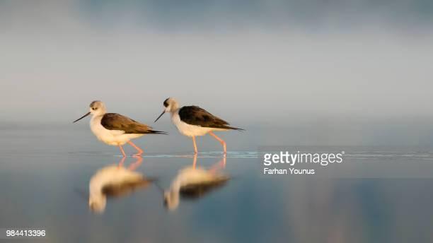Two stilts at a lake.