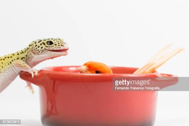 Two strange friends: reptile and bird. Animal Adoption