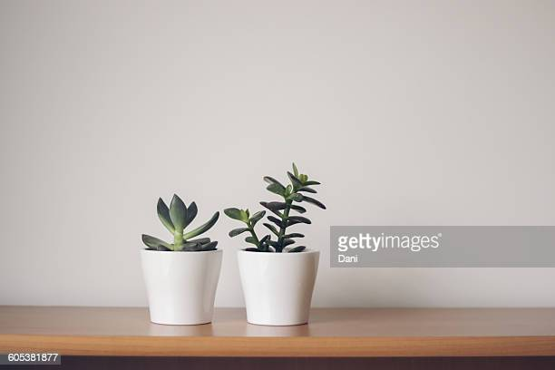 two succulents in  plant pots - succulent stock pictures, royalty-free photos & images
