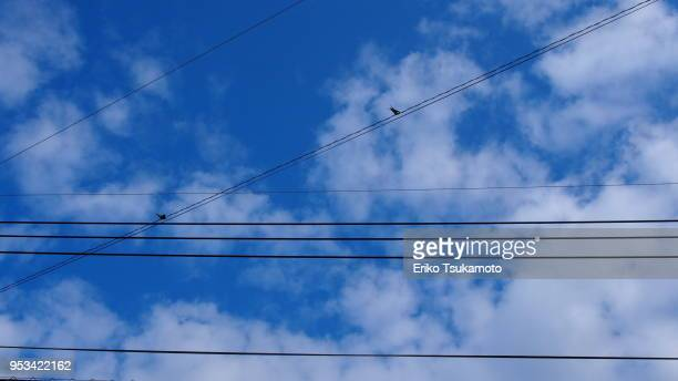 Two swallows and cables against blue sky