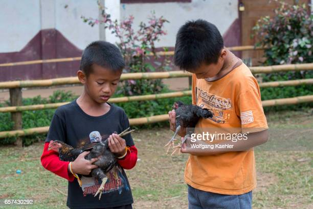 Two teenage boys holding a chicken at Ban Muangkeo Village a cultural heritage village on the Mekong River near Luang Prabang in Central Laos