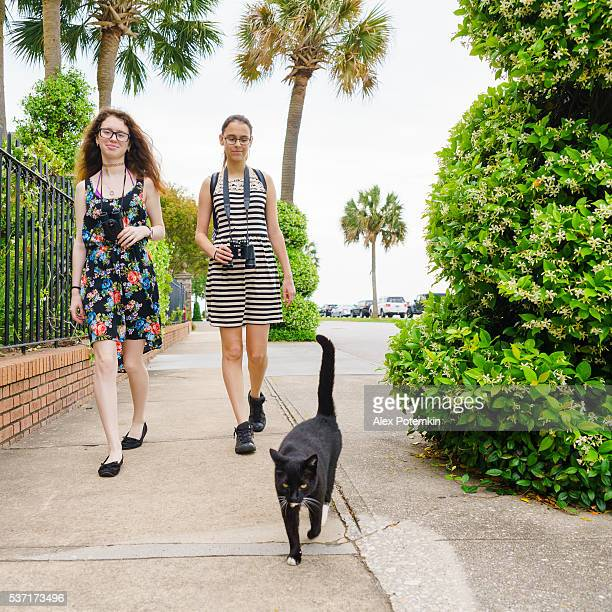 Two teenager girls and cat walks on the street