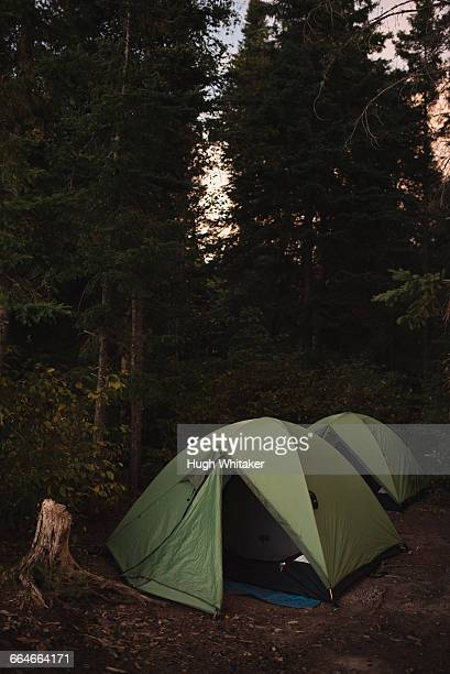 Two tents pitched in forest, sunset