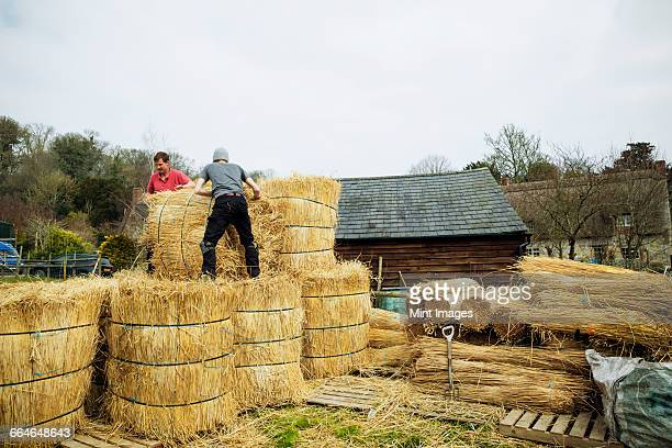 Two thatchers moving bundles of straw for thatching a roof.