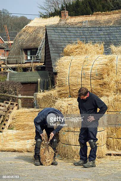 Two thatchers, one cutting a yelm of straw with a pair of shears.