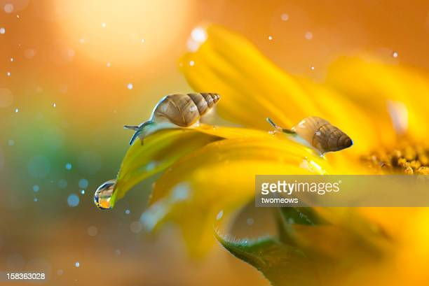 two thirsty garden snails - garden snail stock photos and pictures