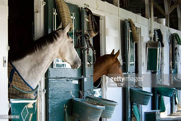two thoroughbreds in stable - kentucky stock pictures, royalty-free photos & images