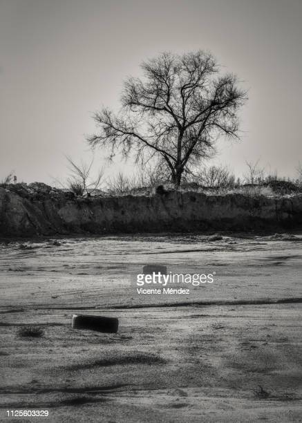 Two tires and a tree
