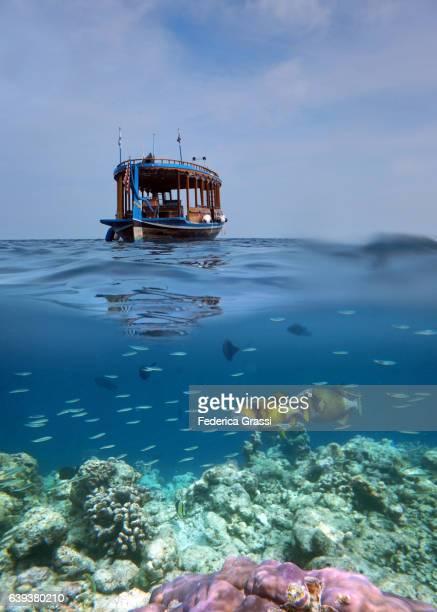 Two Titan Triggerfish (Balistoides viridescens) and a Dhoni (Traditional Maldivian Boat)