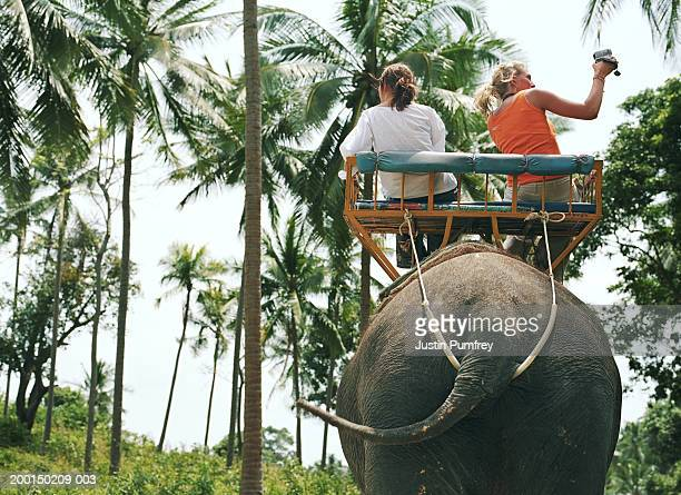 Two tourists riding on manned elephant through palm trees, rear view