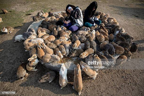 Two tourists sit and feed hundreds of rabbits at Okunoshima Island on February 24 2014 in Takehara Japan Okunoshima is a small island located in the...