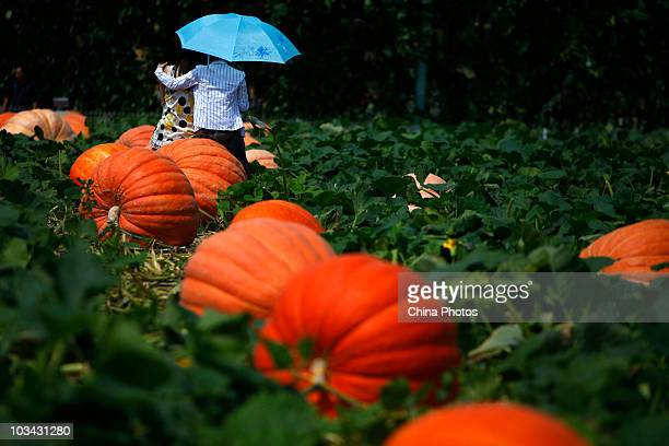 Two tourists sit on a huge pumpkin at the botanical exhibition area of the Changchun Agricultural Expo Park at the Ninth Changchun International...