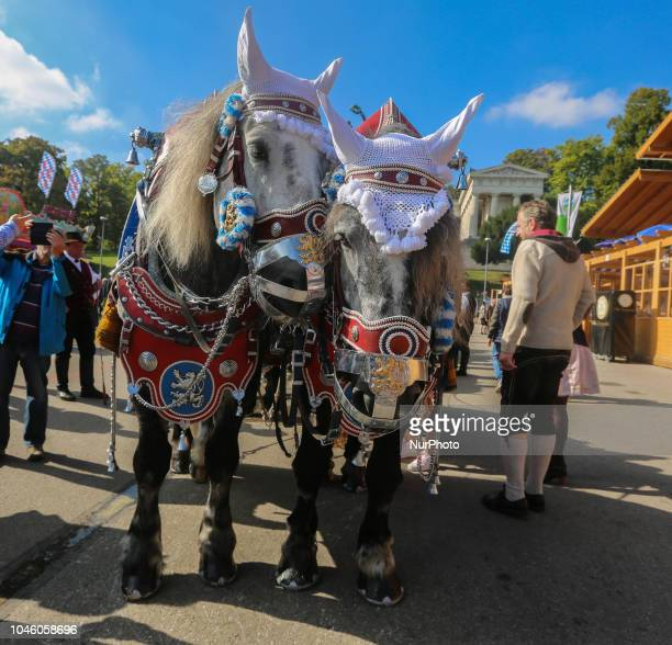 Two traditional horses that carry the beer on Day 12 of the Oktoberfest The Oktoberfest is the largest Volksfest in the world It will take place...