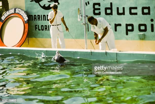 Two trainers put a show with an 'educated porpoise' at Marie Studios Marineland Florida 1955