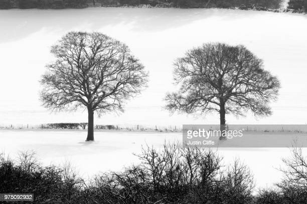 two trees - justin cliffe stock pictures, royalty-free photos & images