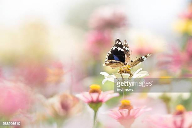 Two tropical butterflies stop at one single flower.