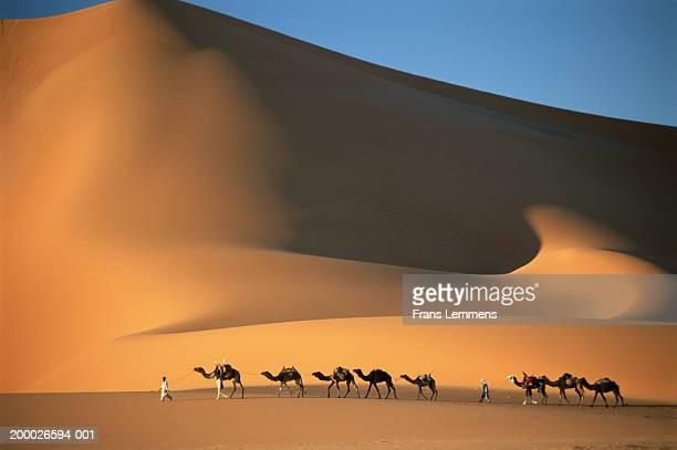 two tuareg tribesmen crossing dunes with camel train - argélia - fotografias e filmes do acervo