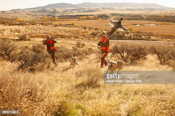 Two Upland Bird Hunters Flushing Pheasant And Lab Running After Them