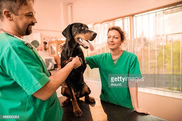 Two vets having a medical exam with a black dog.