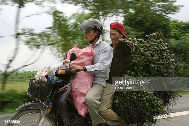 Two Vietnamese men carry betel nuts on the way from Danang to Hue