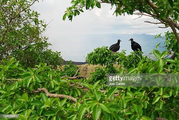two vultures at masaya volcano in nicaragua - masaya volcano stock pictures, royalty-free photos & images