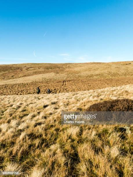 Two walkers on the moor near Garn Gron, Ceredigion. The Cambrian Way, Wales, UK