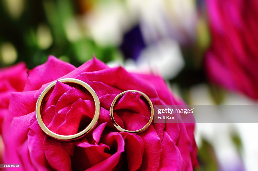 two wedding rings on a bright coloured rose stock photo getty images