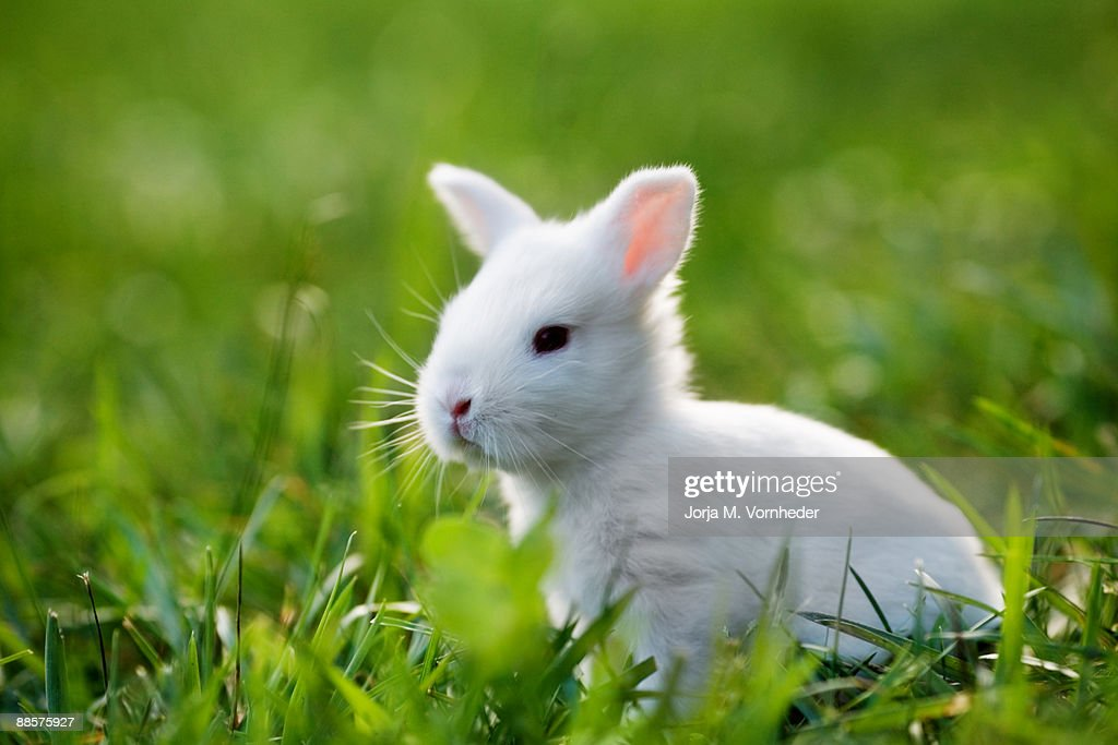Two Week old Bunny : Stock Photo