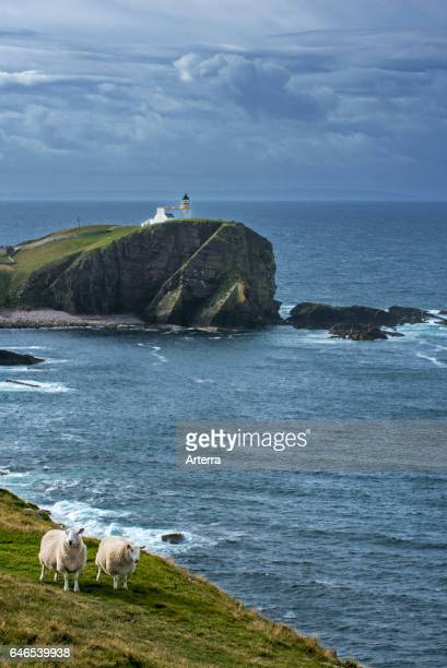 Two white sheep and the Stoer Head Lighthouse at the Point of Stoer in Sutherland Scottish Highlands Scotland UK