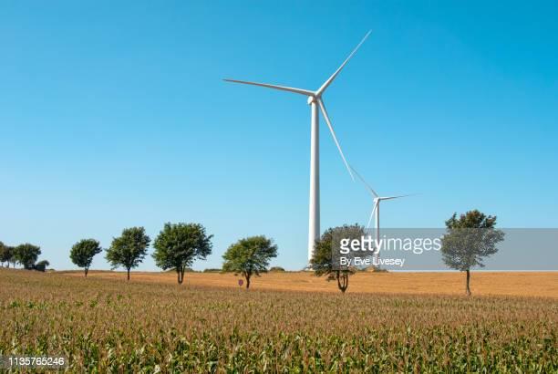 two white windmills - vegetais - fotografias e filmes do acervo