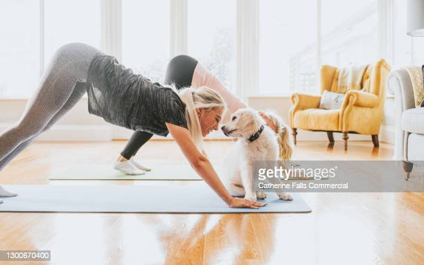two woman performing yoga - golden retriever puppy sits close-by and looks into owners face - 20 24 years stock pictures, royalty-free photos & images