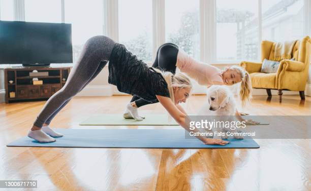 two woman performing yoga - golden retriever puppy sits close-by and looks into owners face - yoga stock pictures, royalty-free photos & images