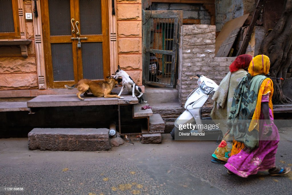 Two women and two dogs : Stock Photo