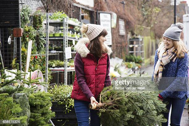 two women are carrying their christmas tree at the city garden centre. - christmas tree farm stock pictures, royalty-free photos & images
