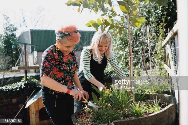 two women at home gardening - europe stock pictures, royalty-free photos & images