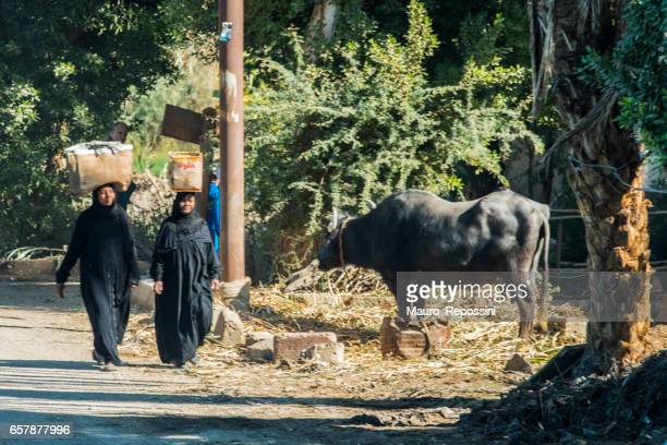 two women carrying boxes on head at a luxor street, egypt. - oxen stock photos and pictures